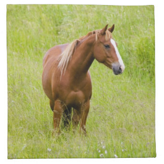 USA, Washington, Horse in Spring Field, Cloth Napkins