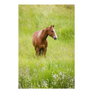 USA, Washington, Horse in Spring Field, Photo Print