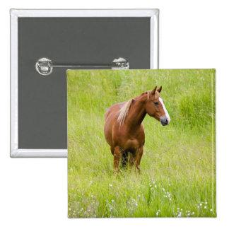 USA, Washington, Horse in Spring Field, Pinback Button