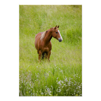 USA, Washington, Horse in Spring Field, Poster