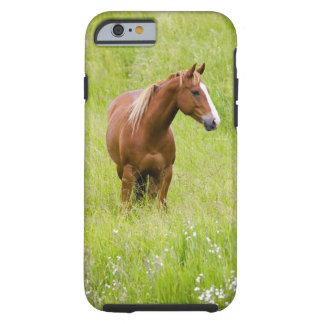 USA, Washington, Horse in Spring Field, Tough iPhone 6 Case