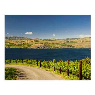 USA, Washington, Lake Chelan. Vineyard Postcard