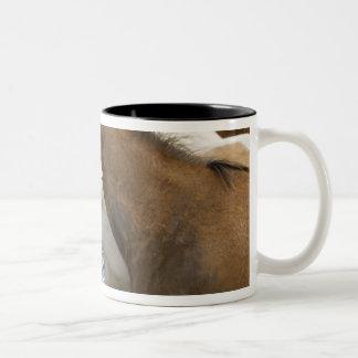 USA, Washington, Malaga, Cowboy foreman on Two-Tone Coffee Mug