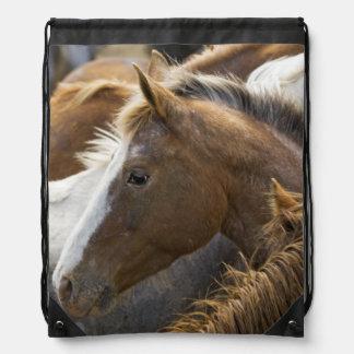 USA, Washington, Malaga, Horse head profile in Cinch Bags