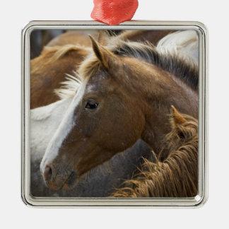 USA, Washington, Malaga, Horse head profile in Metal Ornament