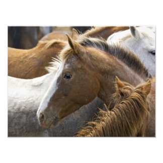 USA, Washington, Malaga, Horse head profile in Photo Art