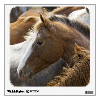 USA, Washington, Malaga, Horse head profile in Wall Decal