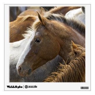USA, Washington, Malaga, Horse head profile in Wall Sticker