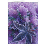 USA, Washington, Mill Creek Frost-covered Card