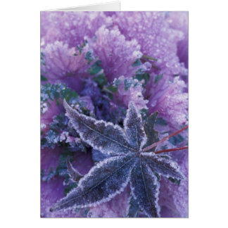 USA, Washington, Mill Creek Frost-covered Greeting Card