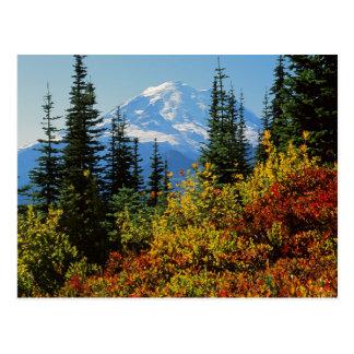 USA, Washington, Mt. Rainier National Park 2 Postcard