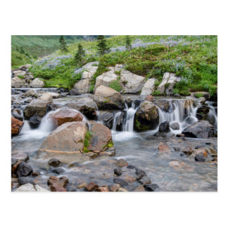 USA, Washington, Mt. Rainier National Park 3 Postcard