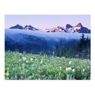 USA, Washington, Mt. Rainier National Park 4 Postcard