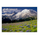 USA, Washington, Mt. Rainier National Park. Cards