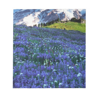 USA, Washington, Mt. Rainier National Park. Mt. Notepad