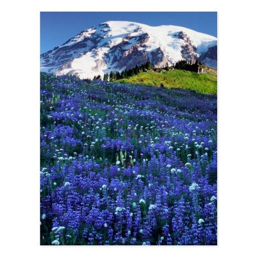 USA, Washington, Mt. Rainier National Park. Mt. Postcards