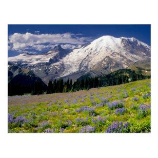 USA, Washington, Mt. Rainier National Park. Postcard