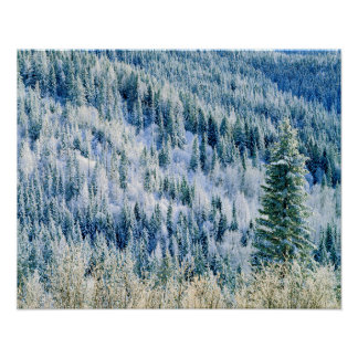 USA, Washington, Mt. Spokane State Park, Aspen 2 Poster