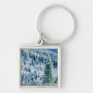 USA, Washington, Mt. Spokane State Park, Aspen Keychain