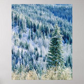 USA, Washington, Mt. Spokane State Park, Aspen Poster