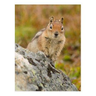 USA, Washington, North Cascades National Park 11 Postcard