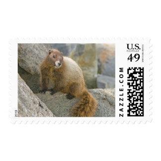 USA, Washington, North Cascades National Park 2 Stamp
