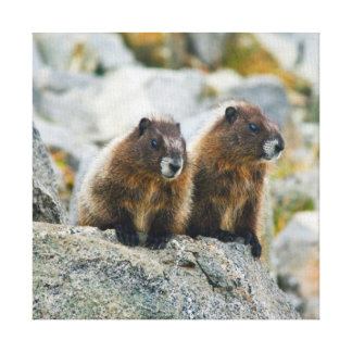 USA, Washington, North Cascades National Park 3 Canvas Prints