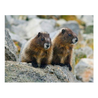 USA, Washington, North Cascades National Park 3 Postcard