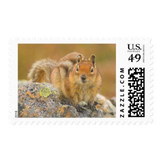 USA, Washington, North Cascades National Park 5 Postage
