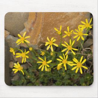 USA, Washington, North Cascades National Park 7 Mouse Pad
