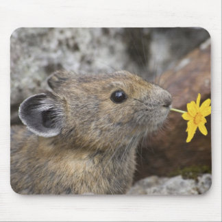 USA, Washington, North Cascades National Park, Mouse Pad