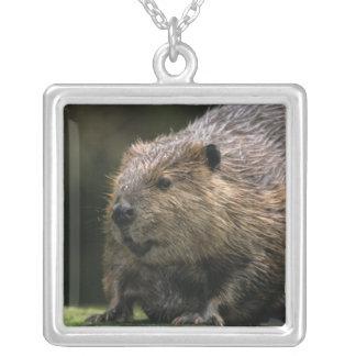 USA, Washington, Northwest Trek. Beaver Square Pendant Necklace