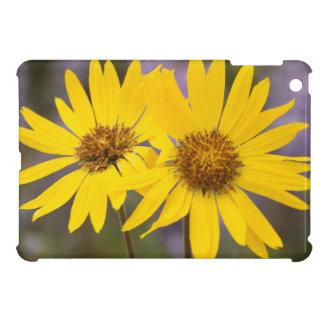 USA, Washington, Okanogan National Forest iPad Mini Covers