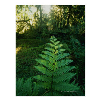 USA,Washington,Olympia National Park,Hoh River Postcard