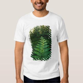 USA,Washington,Olympia National Park,Hoh River T Shirt