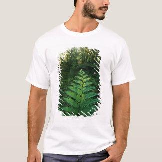 USA,Washington,Olympia National Park,Hoh River T-Shirt