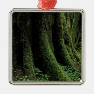 USA Washington Olympic National Park 2 Christmas Ornament