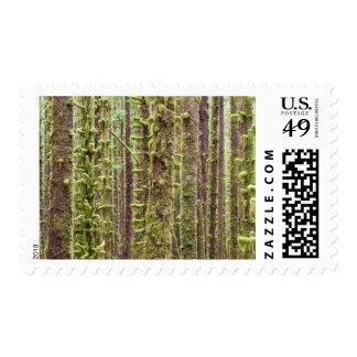 USA, Washington, Olympic National Park 3 Stamps