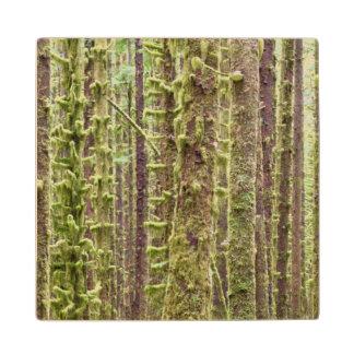 USA, Washington, Olympic National Park 3 Wooden Coaster