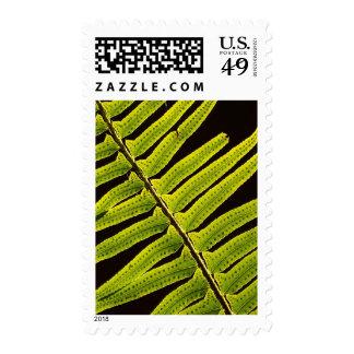 USA, Washington, Olympic National Park, Backlit Stamp