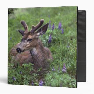 USA, Washington, Olympic National Park. Deer Binder