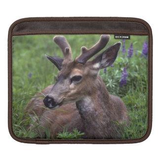 USA, Washington, Olympic National Park. Deer iPad Sleeve