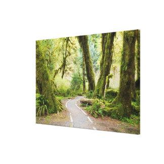 USA, Washington, Olympic National Park, Hiking Canvas Print