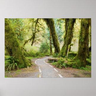 USA, Washington, Olympic National Park, Hiking Poster