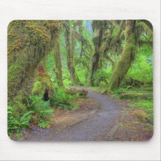 USA, Washington, Olympic National Park, Hoh 2 Mouse Pad