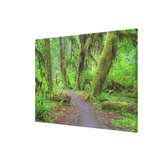 USA, Washington, Olympic National Park, Hoh Rain Canvas Print