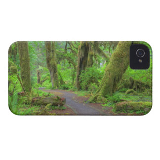 USA, Washington, Olympic National Park, Hoh Rain Case-Mate iPhone 4 Cases
