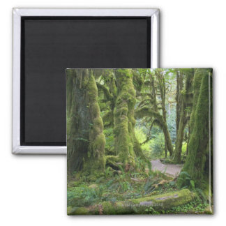 USA, Washington, Olympic National Park, Hoh Rain 2 Inch Square Magnet