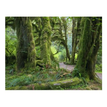 USA Themed USA, Washington, Olympic National Park, Hoh Rain Postcard