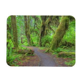 USA, Washington, Olympic National Park, Hoh Rain Vinyl Magnet